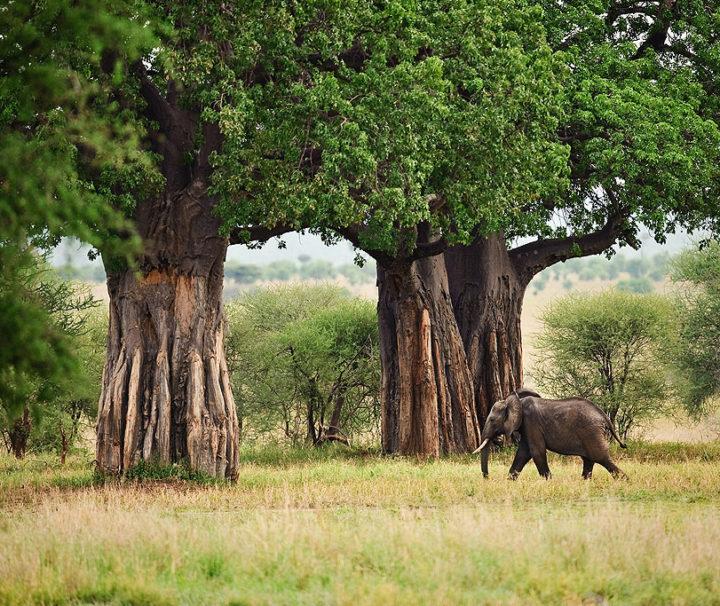 Национальный парк Тарангире
