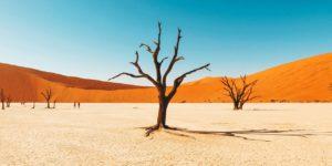 Тур в Намибию